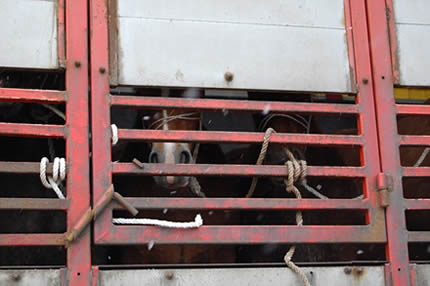 Princess Anne: Catch the crooks exporting live horses that end up on dinner plates in Europe