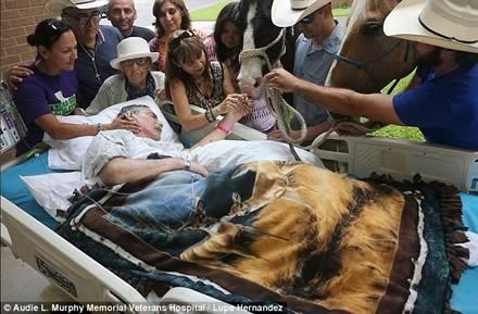 Dying veteran who was paralyzed in Vietnam is reunited with his beloved horses who were brought 150 miles to be by his hospital bedside