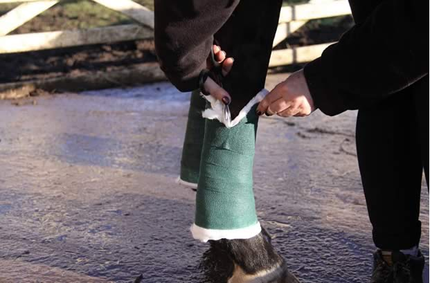 items a first time horse owner should include in a first aid kit.