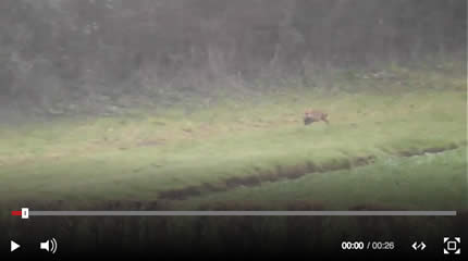 Hunt master cleared of illegal fox hunting