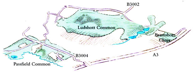 Ludshott Common.